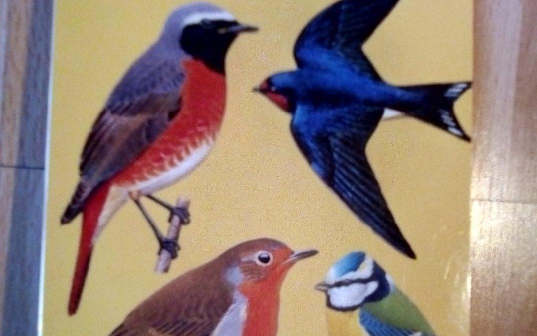 Reconnaitre les oiseaux